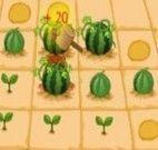fazenda de melancia
