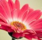Jogo da memória flores