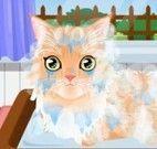 Cuidados com gato de estimação