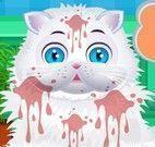 Gato banho de banheira