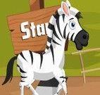 Corrida de Zebra