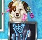 Cuidar do cachorro no veterinário