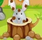 Banho no coelho