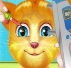 Gato virtual no médico dos olhos