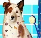 Cachorro banho de chuveiro