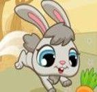 Alimentar o coelho com cenouras