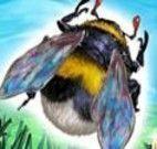 Brincar com abelhinha