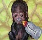 Cuidar do macaco bebê