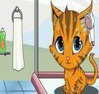Dar Banho, Cortar unhas  e vestir gatinho