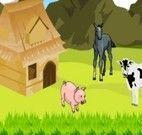 Deocorar fazenda