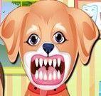Dentista de cachorro