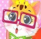 Vestir gatinho de estimação